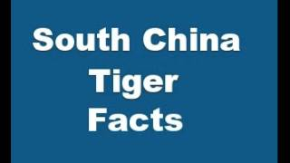 South China Tiger Facts - Facts About South China Tigers
