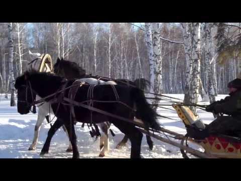 Russian Adventure Tours | Excursion Siberian Snow Troika Ride - Horse Sledge in Siberia  [HD]