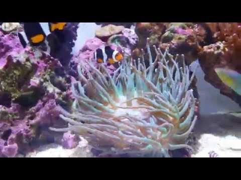 How To Care For Anemones