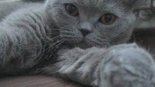 Кошачьи ПРИКОЛЫ серой кошки ДУСИ / ПОДБОРКА