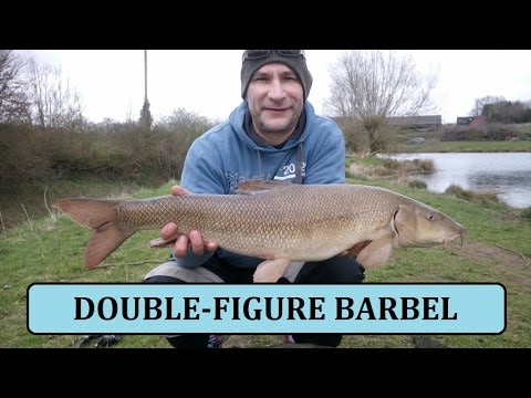 Syndicate Pool - First Trip of the Year 17-3-17 Big Barbel - (Video 12)