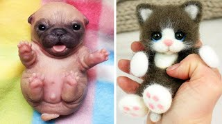 OMG Animals SOO Cute! AWW Cute baby animals Videos Compilation CUTEST moment of the animals #2