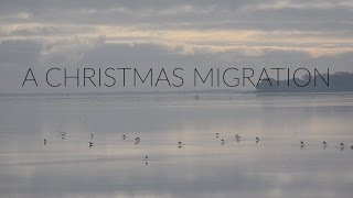 A Christmas Migration