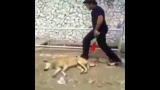 Troll chó cực bá đạo