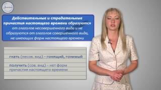 Русский язык 7 класс. Морфологические признаки глагола у причастия