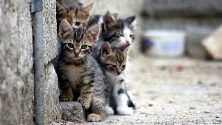 История спасения котят