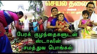 ஸ்டாலின்  சமத்துவ பொங்கல்   Stalin Pongal festival- Oneindia Tamil