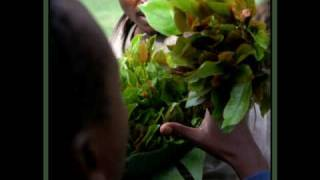 Ethiopian Best chat Khat comedy music ---- MUST SEE