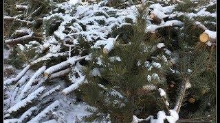 В Челябинске нашли владельцев нераспроданных елок
