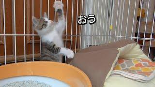 子猫を拾ったサラリーマンの朝(トワが子猫の時)
