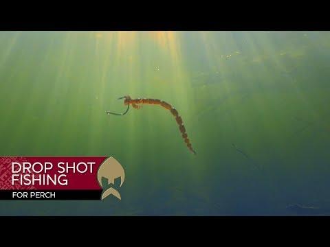 Dropshot fishing for perch - Westin-Fishing