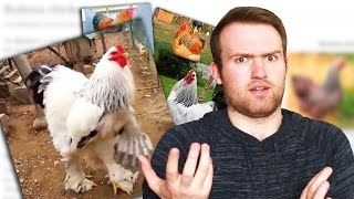 THE GIANT CHICKEN - Is It Real!?