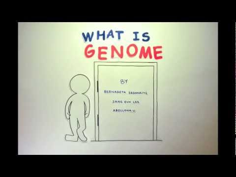 What is Genome? [Winner of the RCSU Science Challenge 2013]
