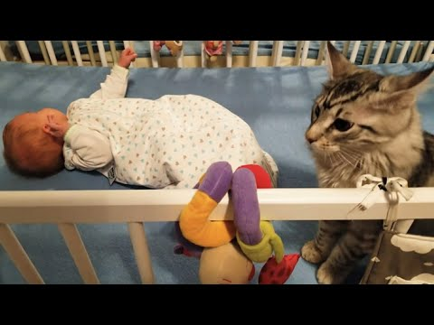 Cute Maine Coon Kitten thinks to protect a Newborn ;) Baby does not notice anything of that Cat play