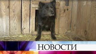 В Челябинске необычный пес Потапыч ищет новых хозяев.