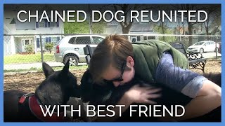 Chained Dog Reunited With Best Friend After Years Apart
