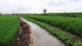 Most Beautiful Rice fields Japan