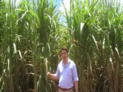 Biotechnology Brazil: Green fuel from GM crops