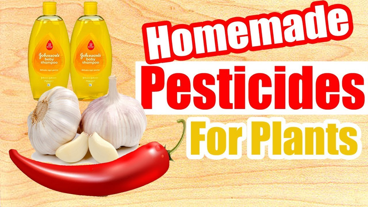 Homemade Pesticides For Plants - YouTube