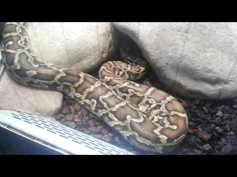 Stuttgart Zoo - Python's