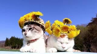 https://kagonekoshiro.com/blog-entry-19972.html かご猫Blog https://...