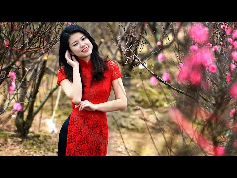 Beautiful Calming Japanese music for Stress | Traditional Japanese music Instrumental