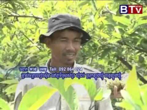 KH Agriculture  [Teab Kg Cham] កសិកម្ម ដំណាំទៀប របស់អ្នកកំពង់ចាម