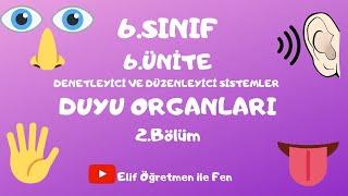 6.SINIF 6.ÜNİTE 2.Bölüm DUYU ORGANLARI