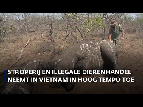 Wildlife crime centreert zich in één Vietnamese straat