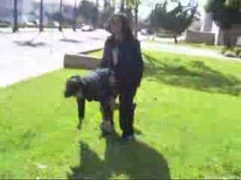 watch animals mate with people - Video Search Engine at ...