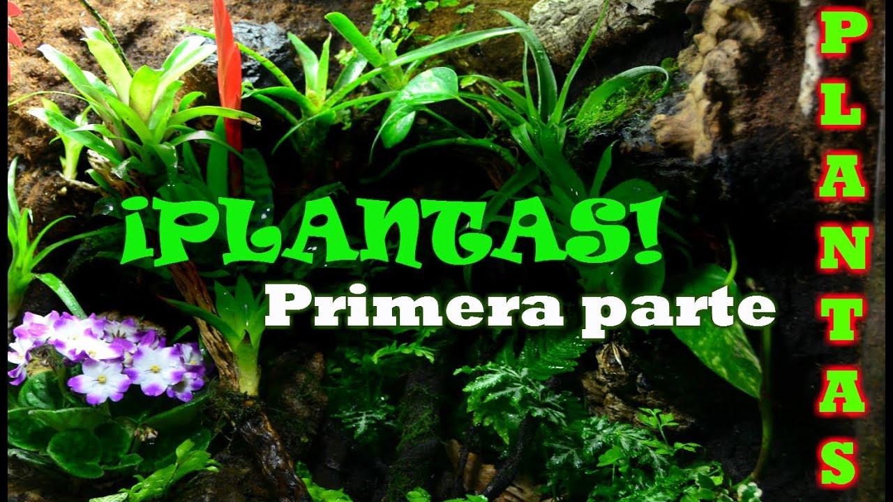 Plantas Para Terrario Cuales Usar Primera Parte Youtube - Terrario-para-plantas