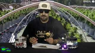 Strain Review w/ Dr Greenthumb - Citrus Punch | BREALTV
