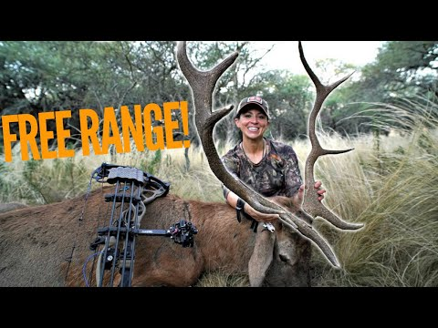 Spot And Stalk Bow Hunting Free Ranging Stag! | Bowmar Bowhunting |