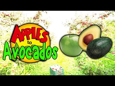 Apples to Avocados: First Edition