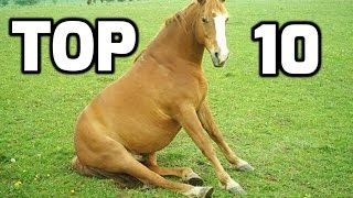 Top 10 Funny Horse Videos Compilation 2016 || NEW HD