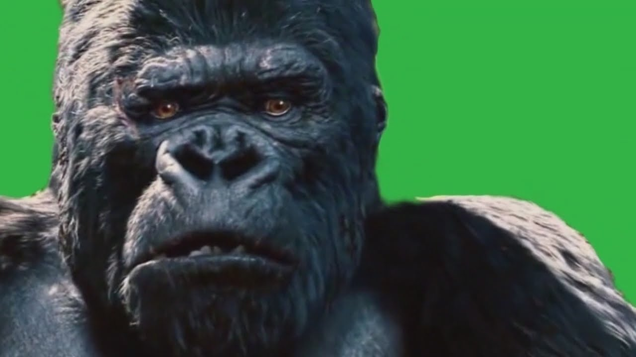 Green Screen Gorilla Gets Mad Hd Animated Youtube