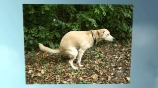 Easy Tips In Housebreaking An Older Dog