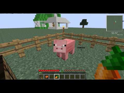 Как приручить свинью