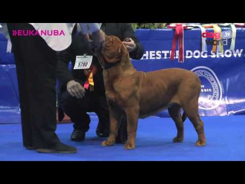 Manchester Dog show 2017 - Working group FULL