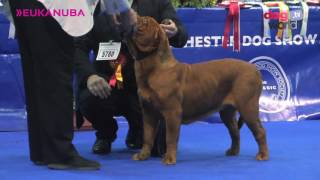 Manchester Dog show 2017  Working group FULL