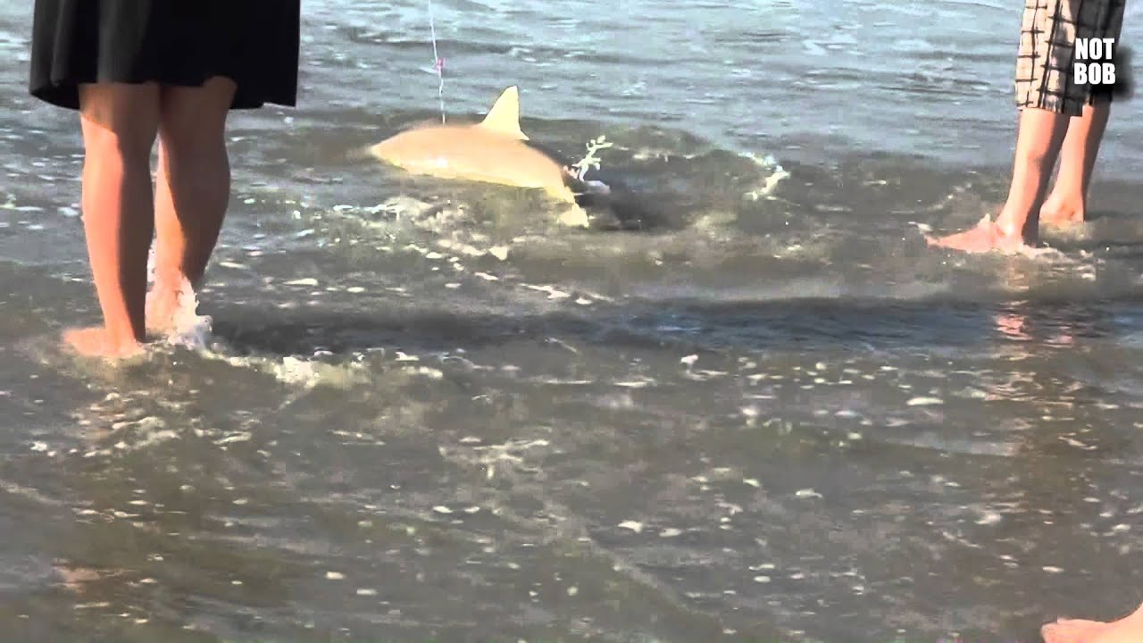 Boy Catches Shark Next to Garden City Pier Myrtle Beach SC