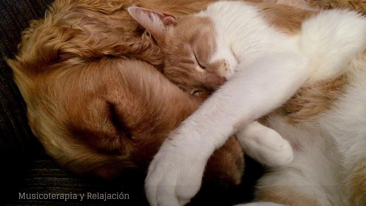 MUSICOTERAPIA Para Gatos Y Perros Inquietos O Nerviosos 💛 Dulce Música Y Ondas Delta Para Dormir