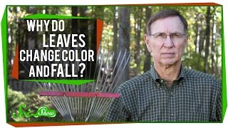 Why Do Leaves Change Color and Fall?