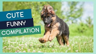 German Shepherd Compilation: Cute Puppies, Funny Dogs & Tricks