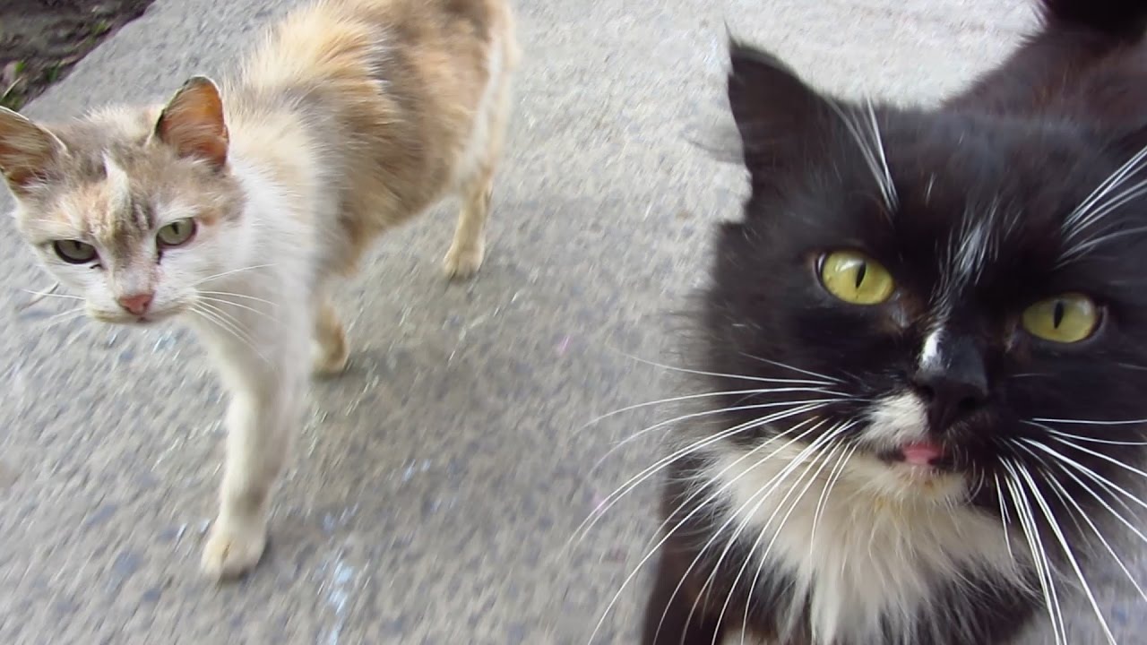 cute cats meowing on the street youtube