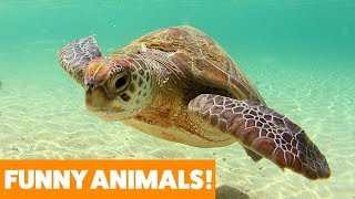 What You Didn't Know About Turtles | Funny Pet Videos 2019