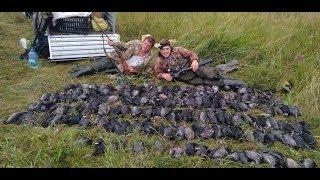 Открытие. Промысловая охота на птицу.