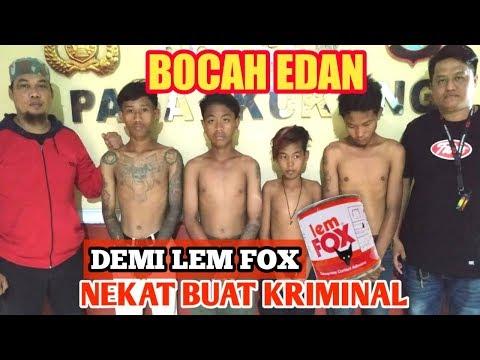 BUSET.!! MASIH BAU KENCUR MENCURI DEMI LEM FOX