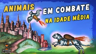 Gatos Foguete [Rocket Cats]