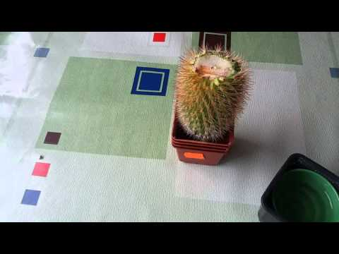 #277.Как спасти кактус